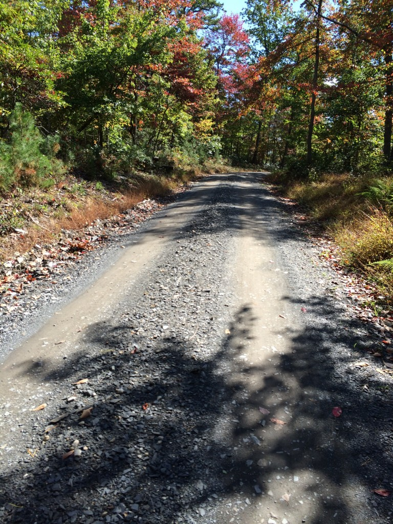 """Michaux Gravel - """"Deluxe"""" with Autumn colors appearing."""