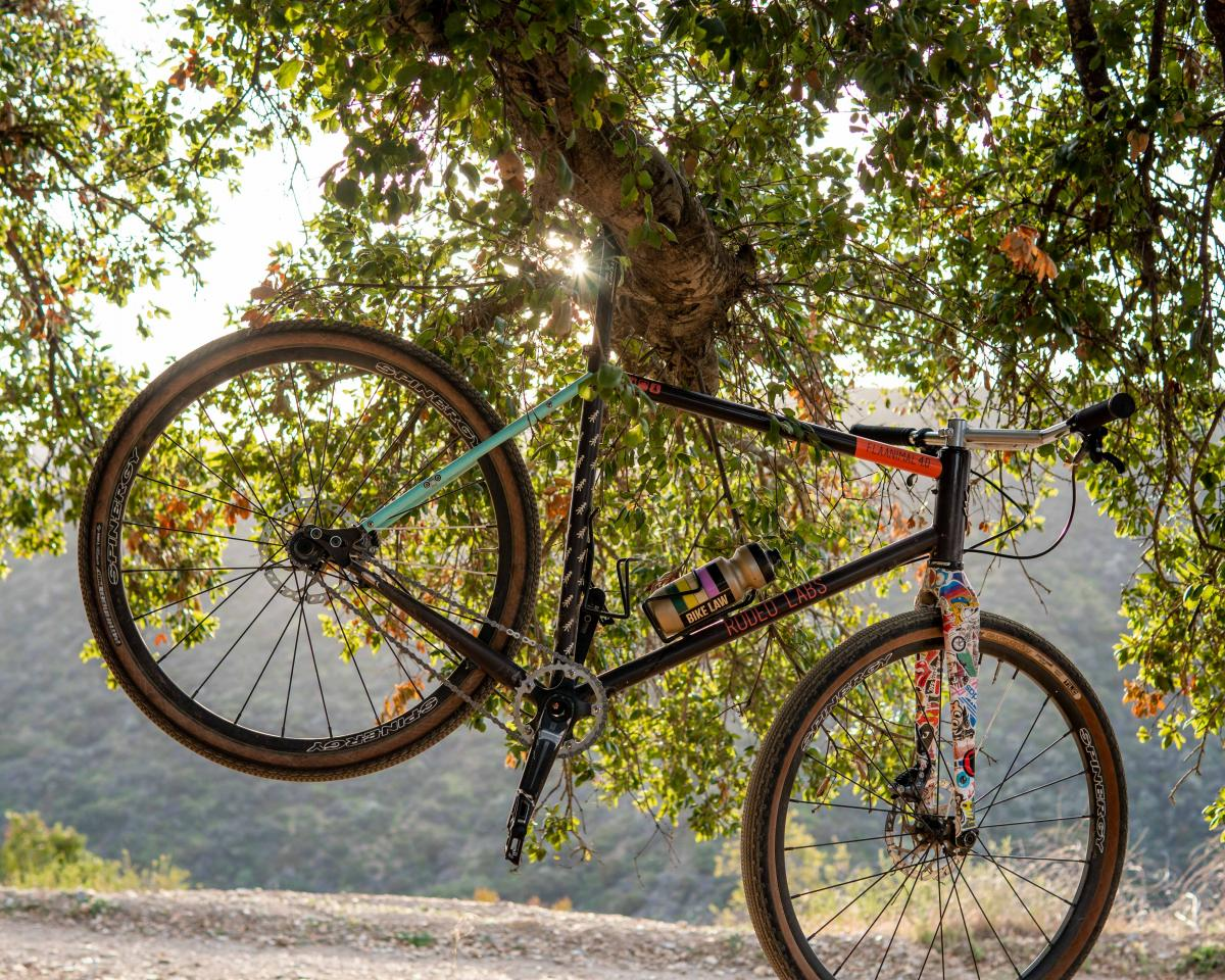 A bicycle in a tree